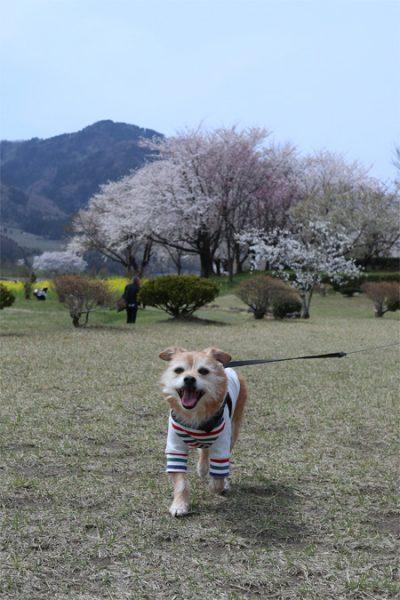 ( お花見完了 )