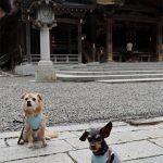 デヴィちゃんと弥彦神社