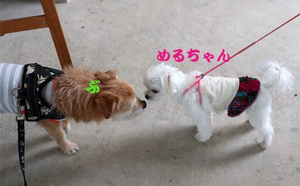 ( こんにちゅわ )