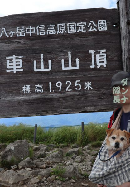 ( 登頂しただ )