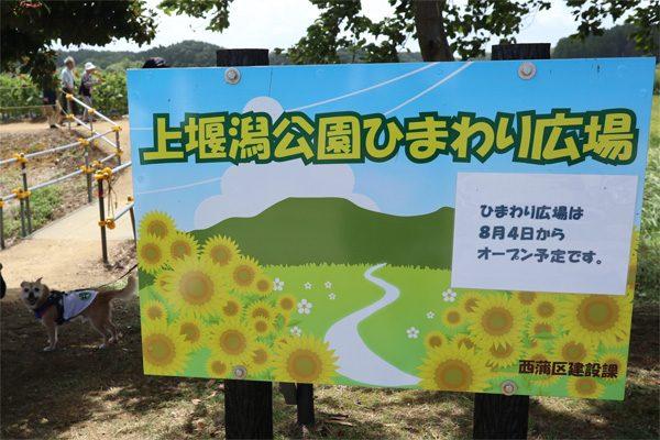 ( 上堰潟公園ひまわり広場 )