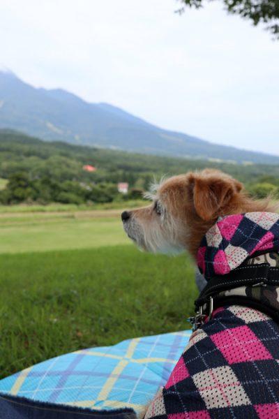 ( 犬だ。。。 )