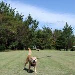 青空と潮風公園