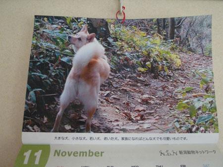 ( NDNカレンダー初版 )