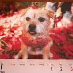 11月です!