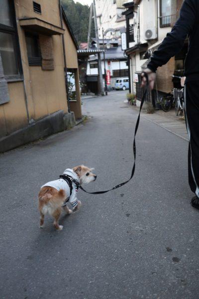(  散歩するだ )