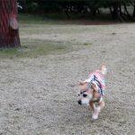 策士の公園散歩