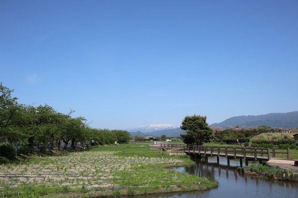 (  新潟県 瓢湖 )