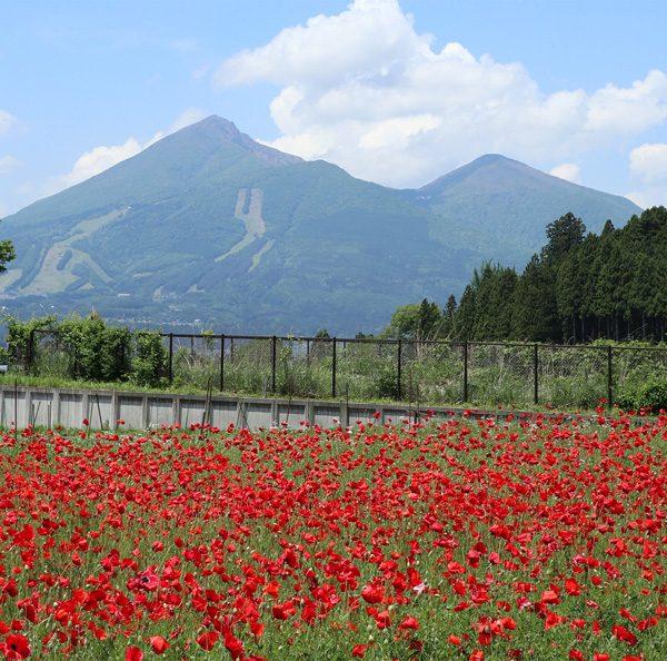 (  会津磐梯山とポピー )