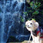 早すぎた赤坂山公園