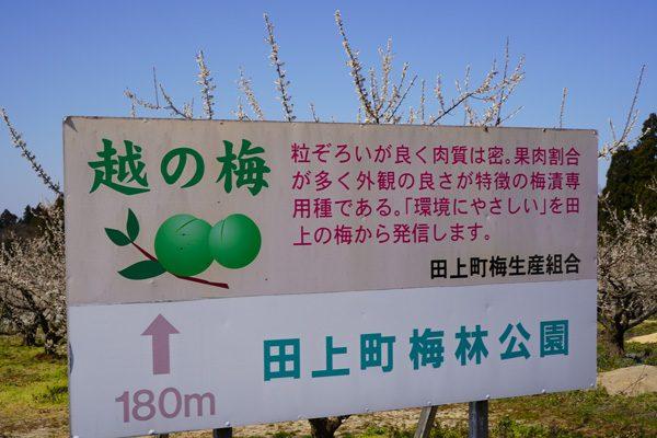 ( 田上町梅林公園 )