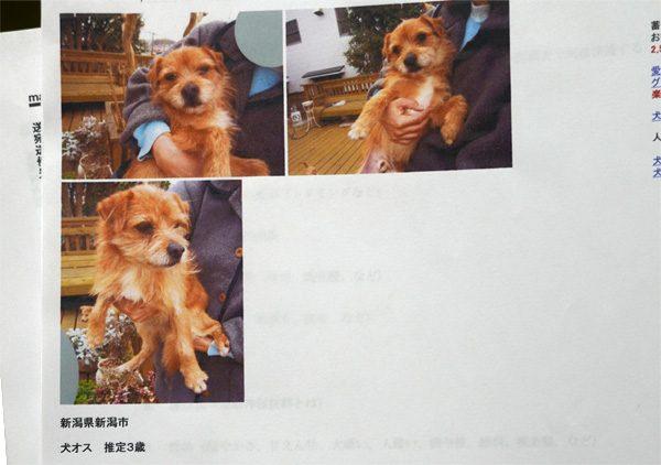 ( 里親募集の写真 )
