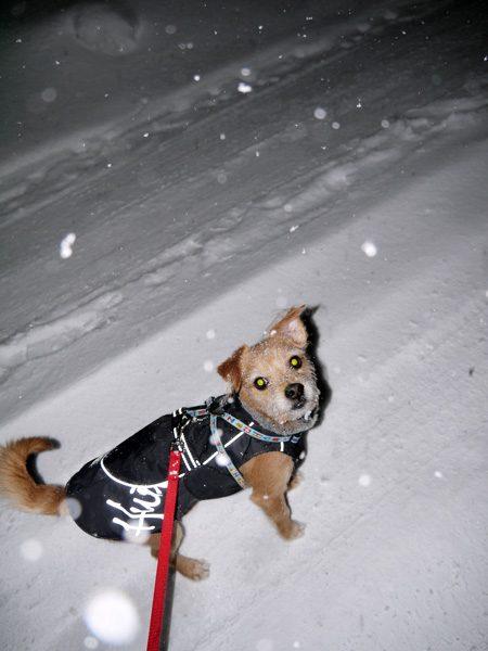 ( 2014年1月 雪 )