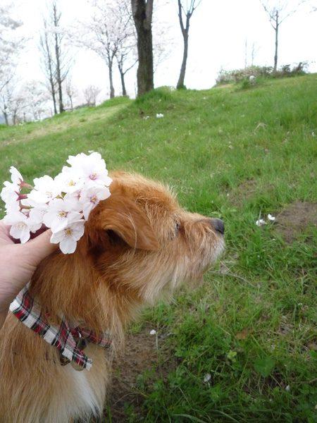 ( お花 )