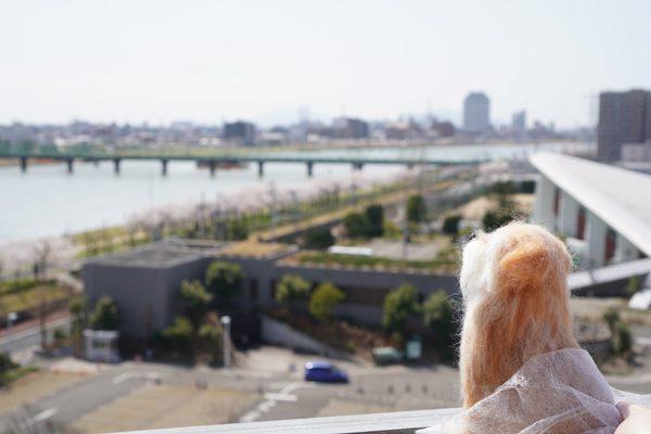 ( 信濃川とやすらぎ堤 )
