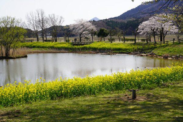 ( 上堰潟公園 2021 )